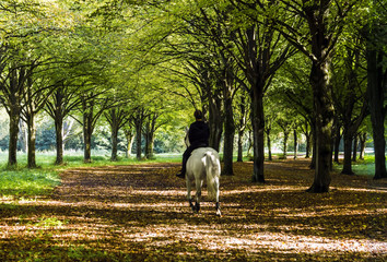 Rider on white horse riding in autumn forest