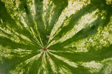 Texture watermelon
