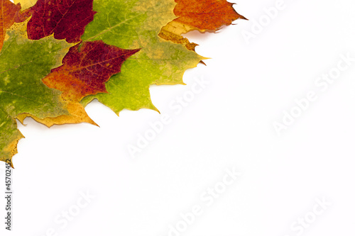 autumn leaves border on white background stock photo and royalty