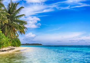 Tropical paradise. Coconut palm white sand tropical beach