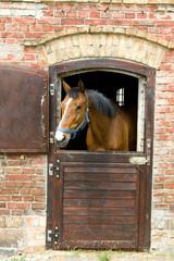 Fototapeta Koń w stajni obraz