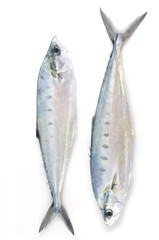 Row of fresh fish
