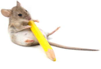 mouse with a yellow pencil on a white background