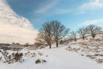 Winter scene in national park Veluwe in The Netherlands
