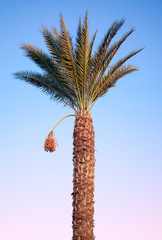 Date-palm tree above bright tropical sky
