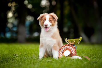 little puppy and his award cup