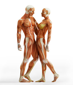 anatomy couple