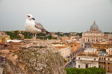 Wall Mural - Seagull and St Peters basilica - Vaticano - Italy
