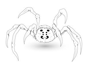White Spider Illustration