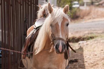 Foal, close up