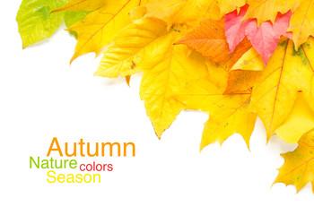 Wall Mural - bunte Herbstblätter