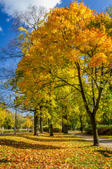 Yellow tree in the autumn park