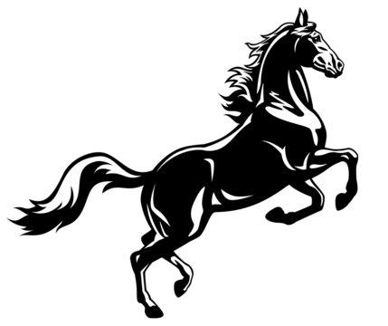 rearing horse black white