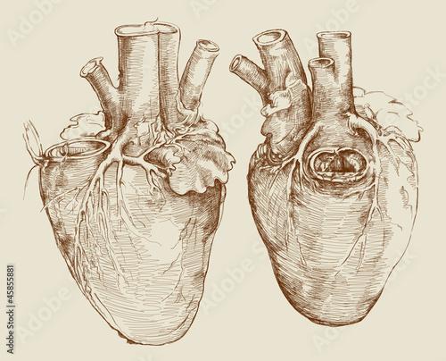 Heart Based On Drawing Of Leonardo Da Vinci Stock Image And