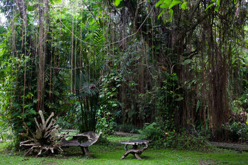 Botanical garden in Bali