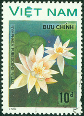 stamp printed by VIETNAM shows water lily