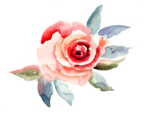 Rose flowers illustration
