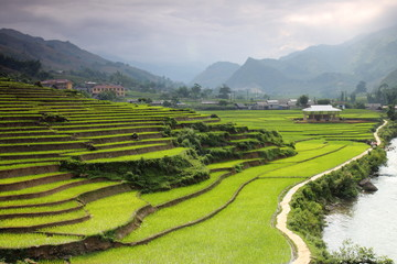Printed roller blinds Rice fields Rice paddy field terrace in Sapa, Vietnam