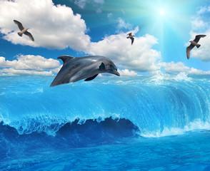 Photo sur Aluminium Dauphins grey dolphin and seagulls