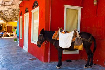 Donkey resting under shadow at Hydra island in Greece saronikos
