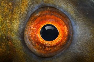 Fish eye (The Tench - Tinca Tinca). Wall mural