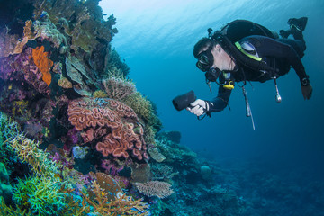 diver with healthy colourful coral Wall mural