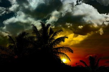 the ocean palms