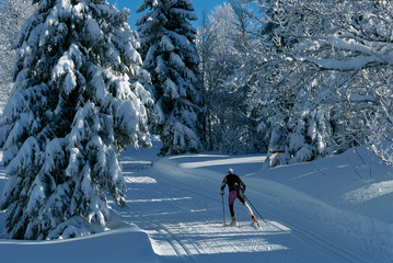 Skating skier on a track through the snowy forest