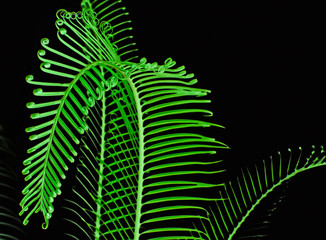 young palm leafs on white background