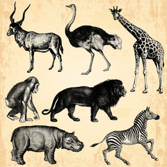 Wall Mural - Animaux Sauvage d'Afrique