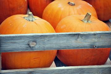 Cerca immagini zucca di halloween for Immagini zucca di halloween