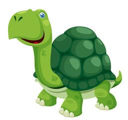 illustration of isolated turtle on white
