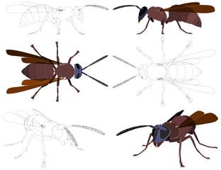 Wasp Vector 01