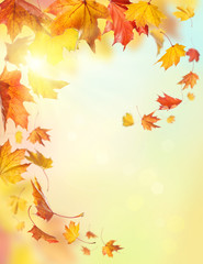 Wall Mural - Autumn falling leaves