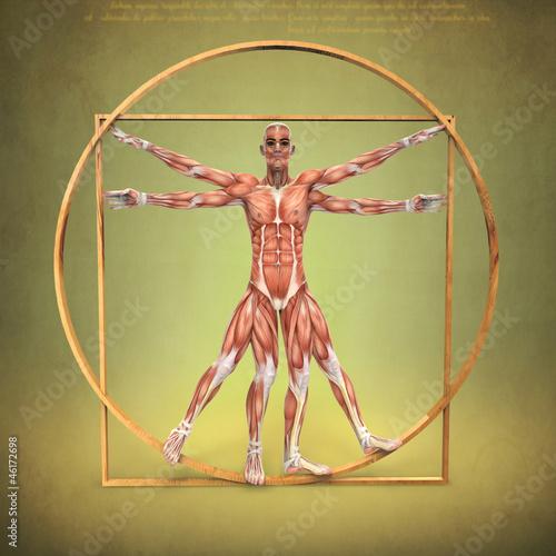 Anatomía de Hombre de Vitruvio\