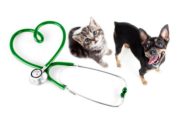 Papier Peint - Veterinary for cats, dogs and other pets concept