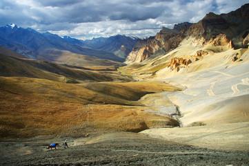 trek in the Himalayas