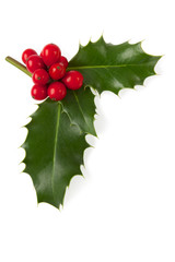 Holly Christmas decoration, Clipping path included.