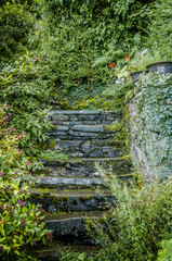 Old grey stone steps in a garden with green foliage