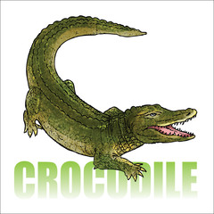 Crocodile - alligator - vector illustration