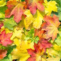 Wall Mural - buntes Herbstlaub