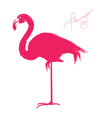 Pink flamingo - vector illustration