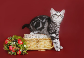kittens with a basket and flowers.