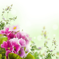 Wall Mural - A spring primrose is in a bouquet, floral background