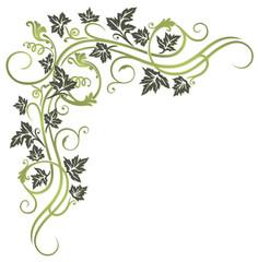 Blätter, Laub, Ranke, Weinblätter, Wein, grün, oliv