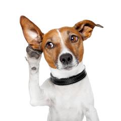 Printed roller blinds Crazy dog dog listening with big ear