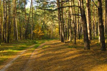 Autumn Ukrainian forest in the morning