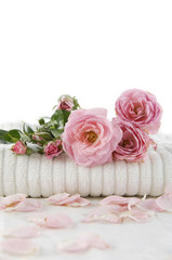 branch rose on soft towel with petals