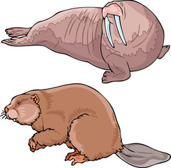 Walrus and beaver