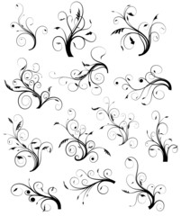 Swirl Floral Collection